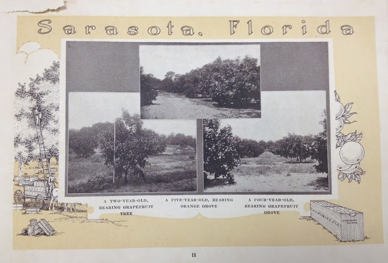 Fig. 2 Orange and grapefruit groves in Sarasota.